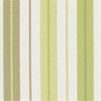 Penny Stripe Green Tea