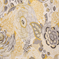 Bambina Canary Floral Drapery Fabric - Order a Swatch